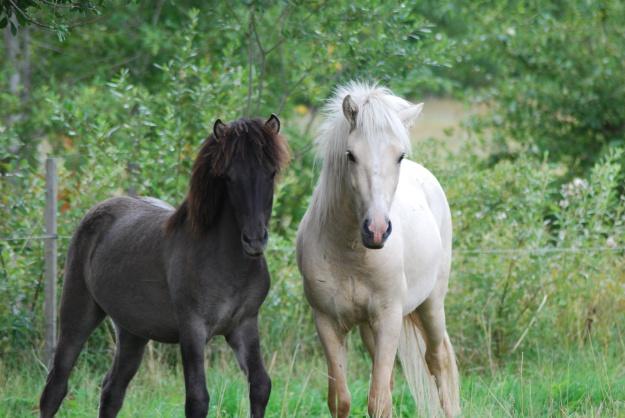 Stormur och Prins Isar